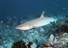 Редкая акула напала на купальщицу