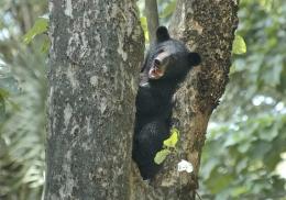 Медведь схватил подошедшую к вольеру женщину