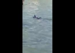 Отдыхающие убили заплывшую на мелководье меч-рыбу