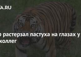 Тигр растерзал пастуха на глазах у его коллег