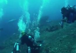 Пугающая встреча студентки с пятиметровой акулой-людоедом попала на видео