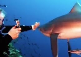 Женщина голыми руками отбилась от акулы и попала на видео