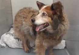 Пропавшая собака три года бомжевала в другом штате и вернулась домой