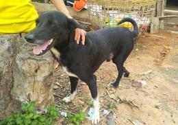 Собака нашла похороненного заживо младенца и спасла ему жизнь