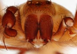 Укус ядовитого паука проделал дыру в ноге британского актера
