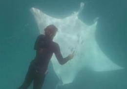 Морской дьявол попросил у людей помощи и попал на видео