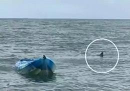 Четырехметровая акула подбросила кричащую девушку в воздух