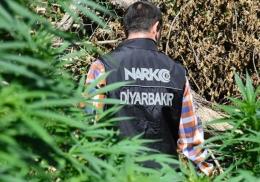 В чаще уникального сада обнаружили гигантские заросли конопли
