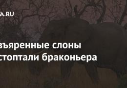 Разъяренные слоны растоптали браконьера