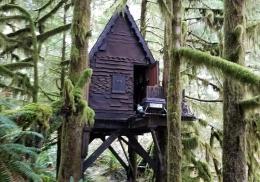 Педофил спрятал детское порно в сказочном домике на дереве в лесу