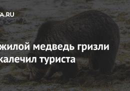 Пожилой медведь гризли покалечил туриста