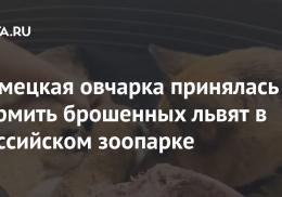 Немецкая овчарка принялась кормить брошенных львят в российском зоопарке