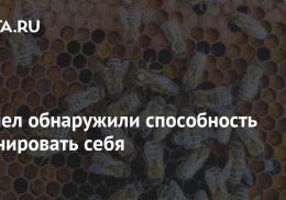 У пчел обнаружили способность клонировать себя