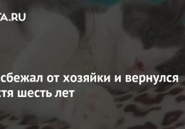 Кот сбежал от хозяйки и вернулся спустя шесть лет