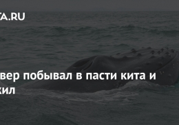 Дайвер побывал в пасти кита и выжил