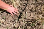 Засуха на Среднем Западе США грозит сокращением урожая