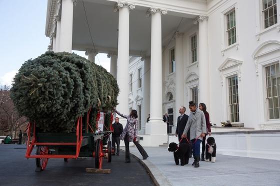 рождественское дерево купить в интернете как в белом доме