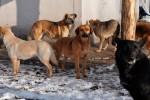 ЧП Вологда: собаки загрызли женщину