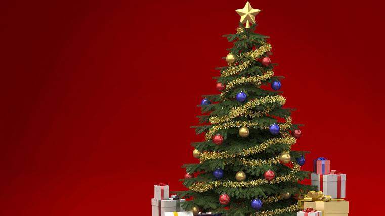 Учёные: нужно правильно подходить к выбору ёлки на Новый год!