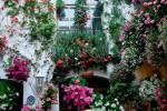 Санкции помогут вернуть позиции ритейлерам цветов
