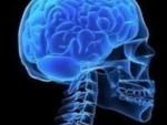 Учёные: размер мозга не связан с величиной IQ