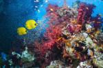 Солнцезащитный крем может быть причиной гибели рифов
