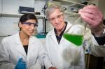 Ученые смогли получить электроэнергию благодаря использованию водорослей