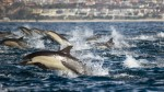 Смерть дельфинов в Калифорнии связывают с деятельностью кораблей ВМС США