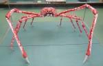 Как морские пауки становятся великанами