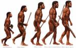 Сколько еще осталось виду Sapiens