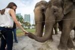 Цирковые слоны братьев Ринглинг уходят на пенсию