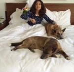Злоумышленники убили собаку актрисы Сальмы Хайек