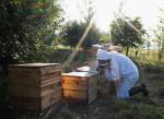 Вымирание пчёл угрожает мировому сельскому хозяйству