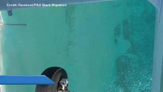 SharkNicole_qtp_640x360_625498691511