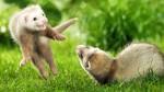 Учёные составили рейтинг «друзей человека» в дикой природе