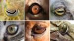 Ученые из Германии выявили «глаза-компасы» у многих современных животных