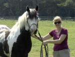 Учёные: лошади способны идентифицировать эмоции людей