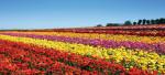 ТОП-5 лучших мест в США для посещения весной