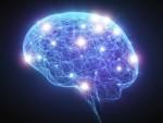 Ученые: учеба и ходьба по лестнице продлят молодость мозга