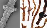 На Готланде найдены ископаемые останки первых сухопутных организмов