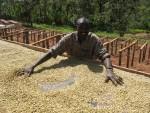Фермеры Эфиопии, пострадавшие от засухи, нуждаются в помощи международного сообщества