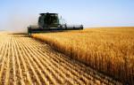 Как масштабы глобального потепления скажутся на сельском хозяйстве