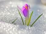 Астрономическая весна наступит двадцатого марта