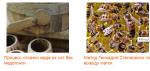 Путь от любителя меда до пчеловода