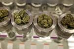 Легализация марихуаны в Канаде не решит проблемы с нелегальным оборотом наркотиков