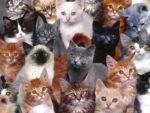 Испанец готов заплатить за любовь к кошкам штраф в сотни тысяч евро
