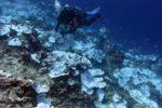 Ученые ведут борьбу за спасение кораллов