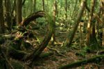 В Японии наказанный родителями мальчик шесть дней пробыл в лесу