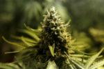 Microsoft начинает заниматься продажей марихуаны