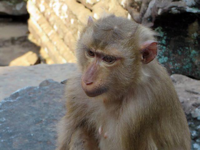 cambodia-1067571_960_720